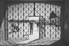 Dachau_KZ112313-01
