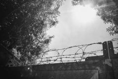 Dachau_KZ133859-01